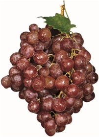 Photos pf a bunch of red grapes
